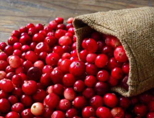 Il Cranberry: le proprietà del mirtillo rosso americano